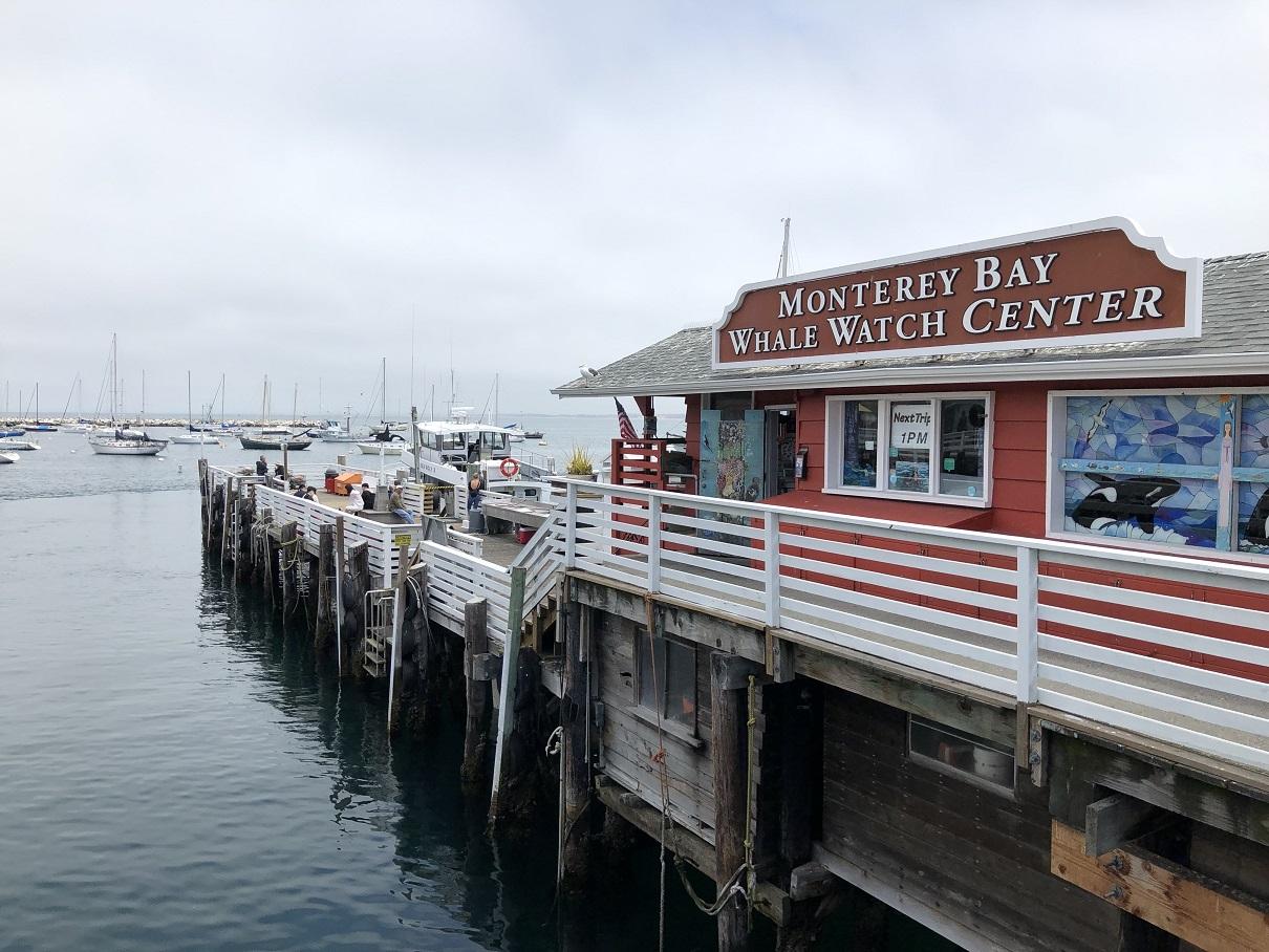 Walvissen spotten bij Monterey